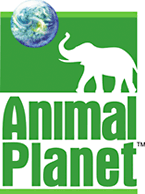 Animal Planetリニューアル前のロゴ